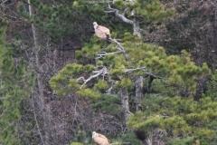 Jadnovnik-oaza-netaknute-prirode-Prijepolje-2