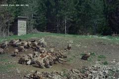 Jadnovnik-oaza-netaknute-prirode-Prijepolje-4