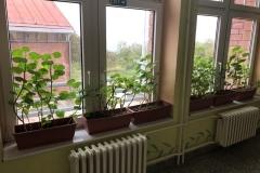 Rekonstrukcija-biblioteke-i-ozelenjavanje-prostora-za-učenike-u-Dračiću-kraj-Valjeva-1-Copy