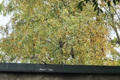 Sove-u-Sremskoj-Mitrovici-bezbedne-postavljene-nalepnice-zbog-refleksije-svetlosti-okolnih-zgrada-8