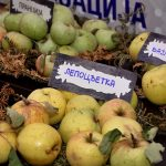 Ukusi i mirisi zaboravljenih sorti voća na izložbi u Beogradu