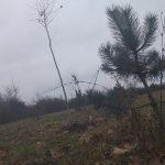 Šumarice bogatije za drvored platana