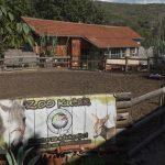 Zoo kutak: Besplatno druženje sa životinjama za nezbrinutu i decu sa zdravstvenim problemima